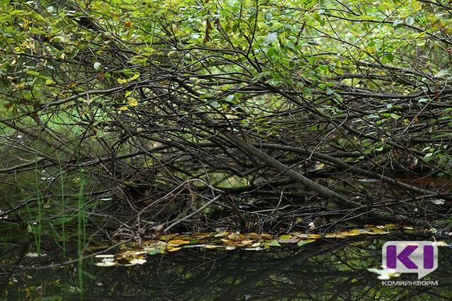 В Ухте злостная неплательщица алиментов скрывалась от судебных приставов в лесу
