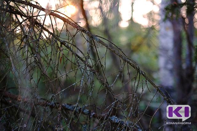 В лесах Коми на минувших выходных заблудились две пенсионерки
