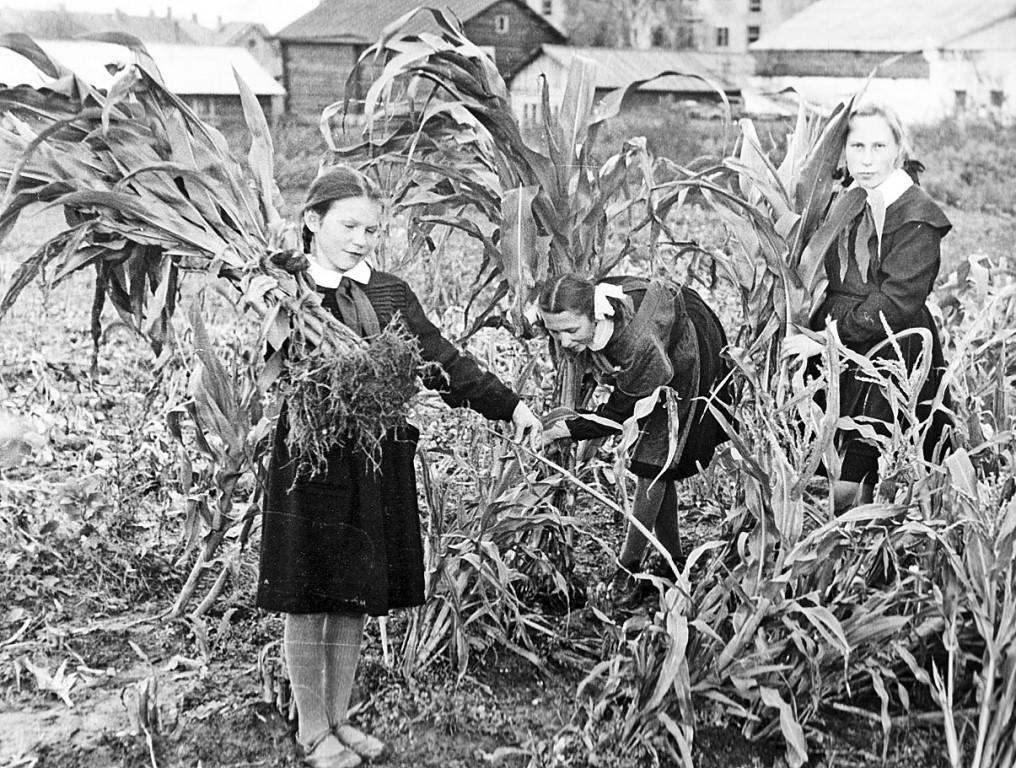 Третий тайм для кукурузы:  Поможет ли эта культура нашим животноводам нарастить кормовую базу?