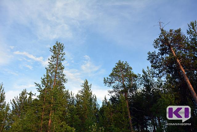 В лесу под Сыктывкаром две женщины