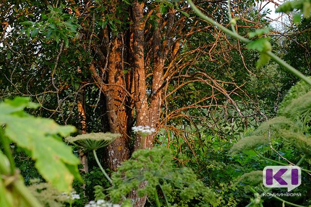 Лишь с рассветом из лесов в Коми смогли выбраться заплутавшие пенсионеры