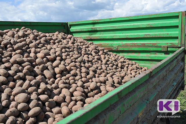 Эжвинцы устроят кулинарные поединки в честь свежего урожая картофеля