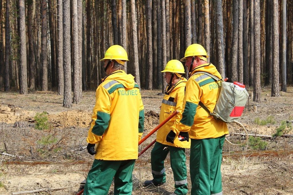 Лесные пожарные Коми будут состязаться в мастерстве