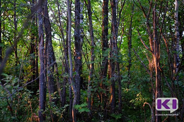 Последний герой: в Прилузском районе 72-летняя грибница восемь дней плутала по лесу