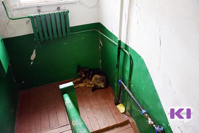 Умершего ухтинца искусала собственная собака