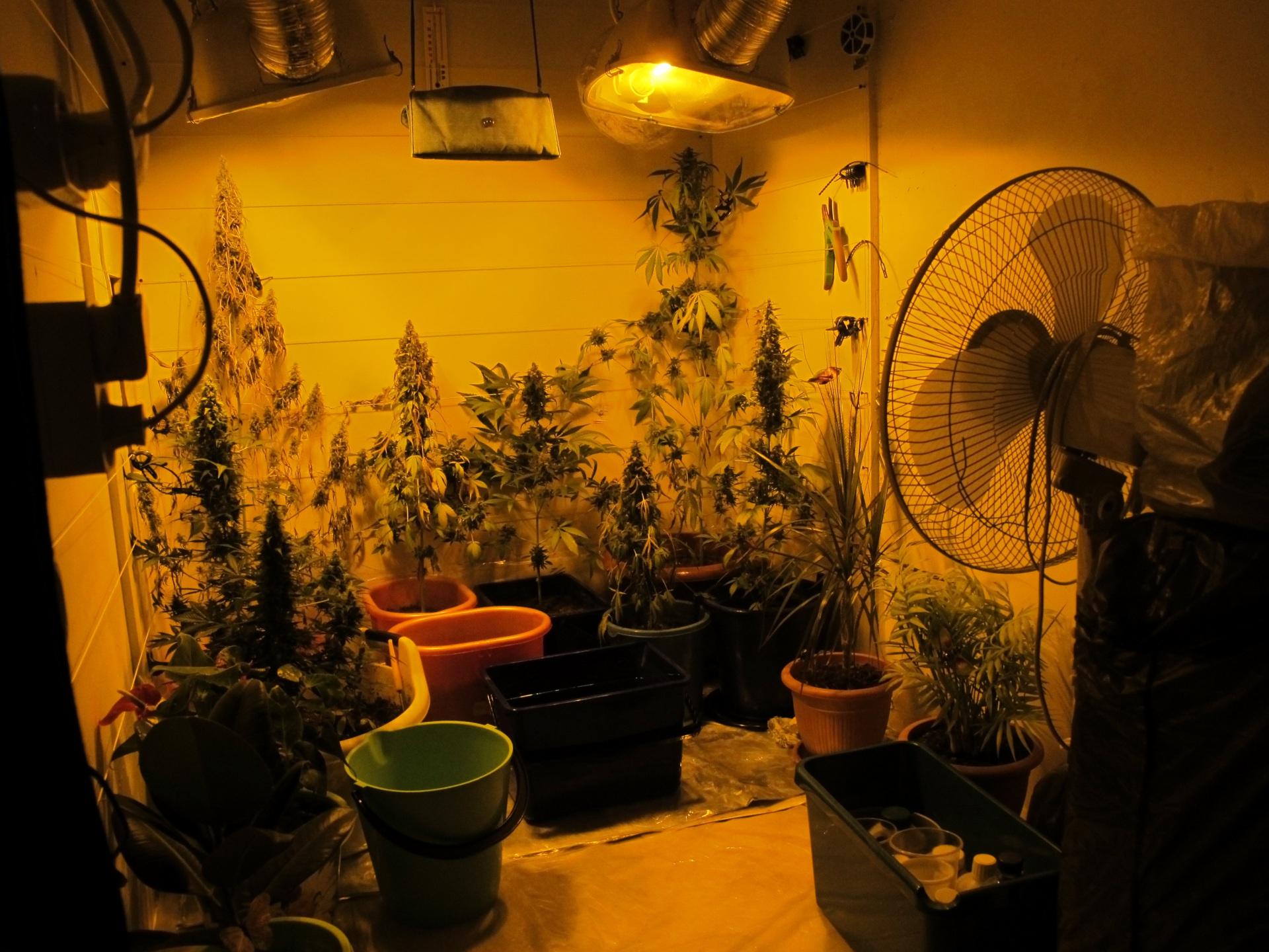 В Коми задержали семейную пару за выращивание марихуаны
