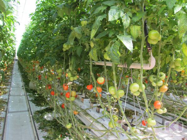 На фермы и развитие растениеводства Коми получит из федерального центра более 9 миллионов рублей