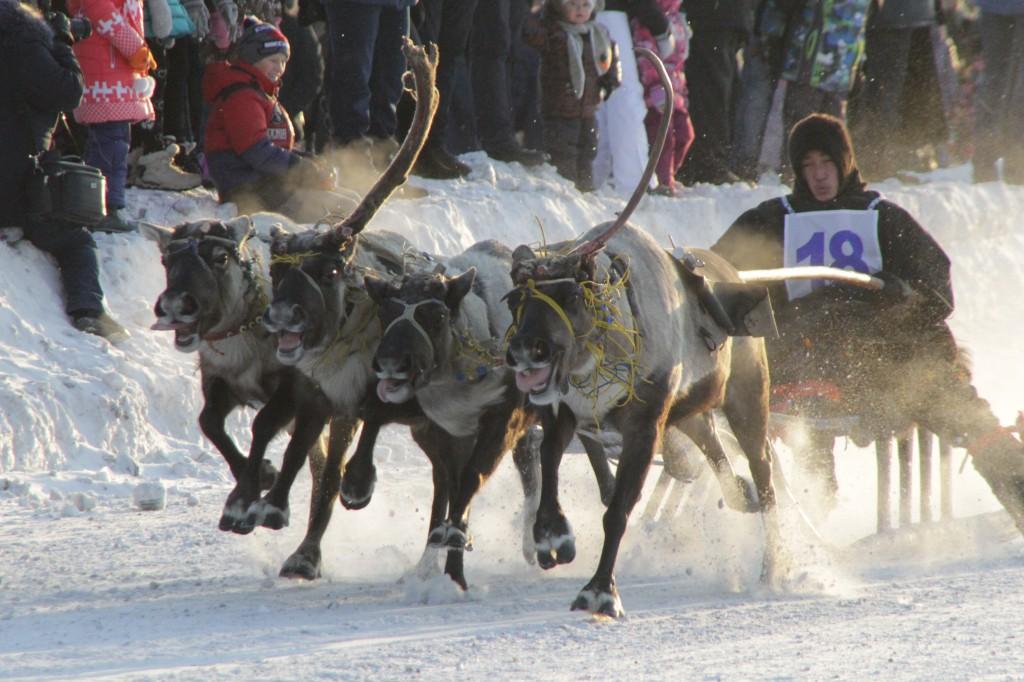 Сергей Гапликов в Инте дал старт празднику оленеводов