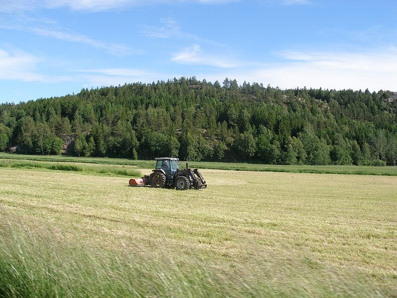 Неиспользуемые по назначению сельхозугодья будут изымать у владельцев