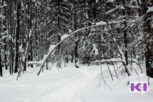В Коми выявляли лесных