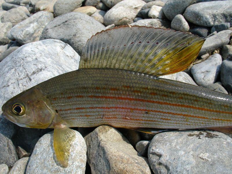 За незаконную рыбалку интинец отработает на государство и заплатит штраф