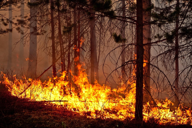 В Коми составлен прогноз горимости на грядущий пожароопасный сезон