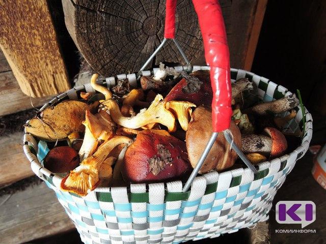 Ежегодно в Коми вырастает 300 тысяч тонн съедобных грибов