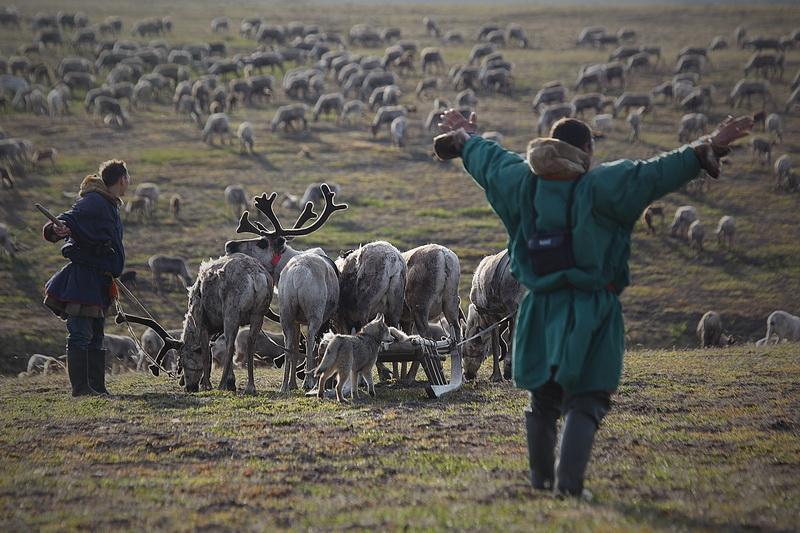 Усинские оленеводы направились в сторону Карского моря