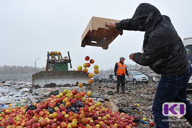 На свалке ТБО под Сыктывкаром уничтожили санкционные яблоки и помидоры