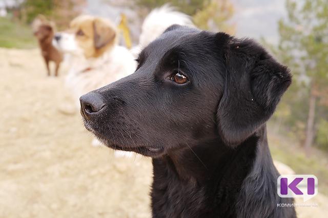 С 5 июня все домашние животные должны быть зарегистрированы в Минсельхозе