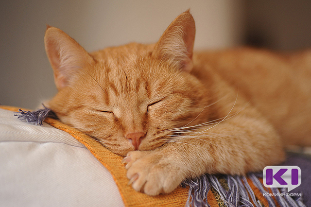 Минсельхоз России не устанавливал новых требований по учету домашних кошек и собак