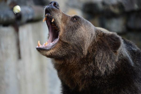 На рыбака из Нижней Омры в лесу напал медведь