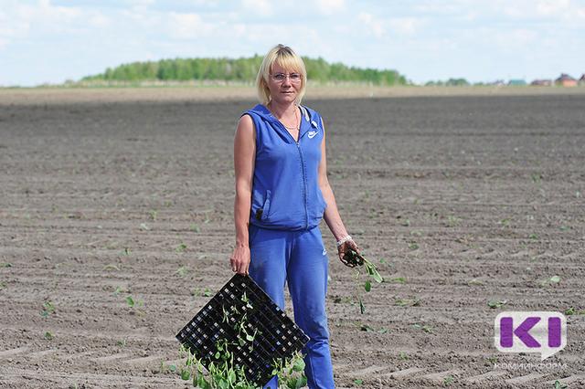 Яровой сев в Коми выполнен на 95%