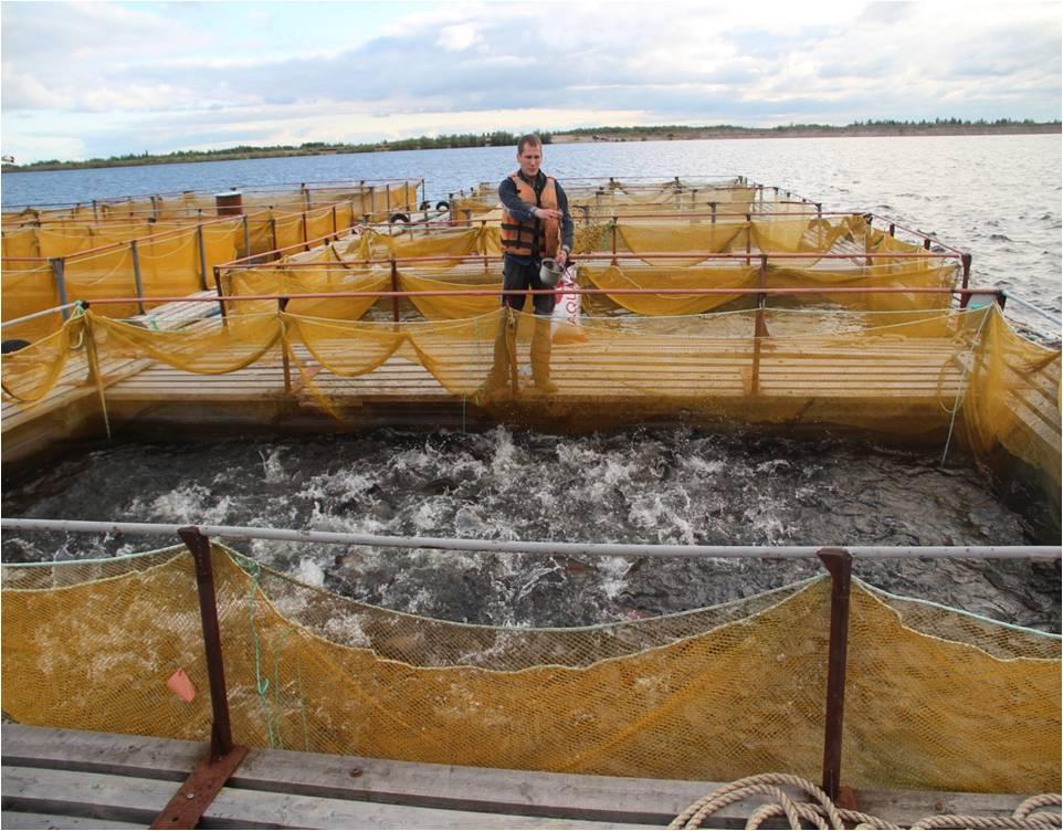 Республика поможет Печоре развивать уникальное производство осетра и единственное в районе молочное хозяйство