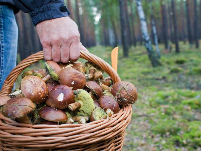 76-летний грибник провел ночь в лесу в Чериковском районе