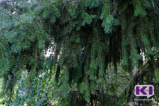 В лесах Коми без вести пропали два пенсионера