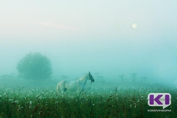 Райская лошадь в тумане стала символом нестареющей Коми