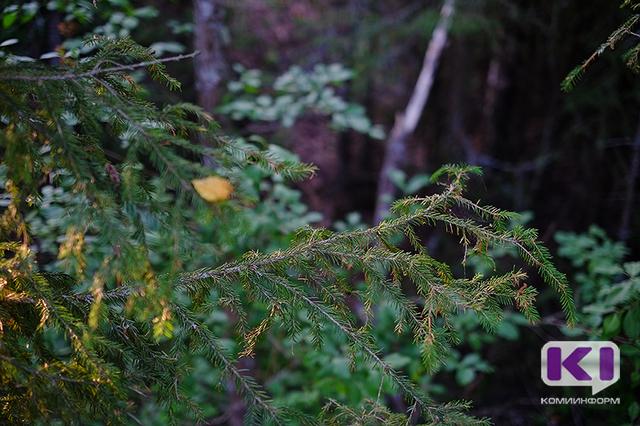 На выходных в лесах Коми потерялись девять человек, одного из них найти не удалось