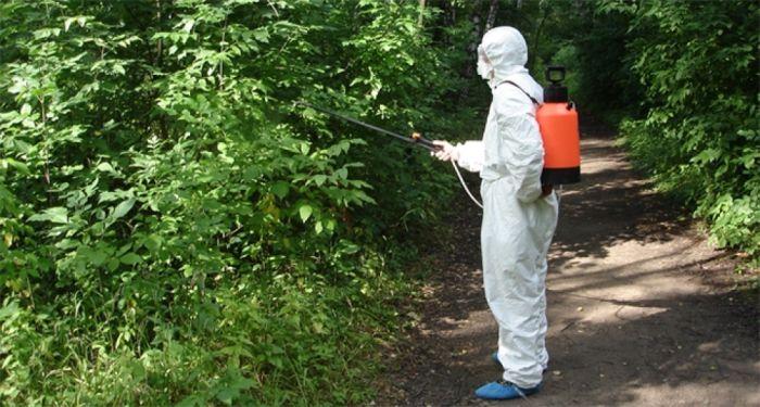 В сельских поселениях Сыктывдинского района не проводятся противоклещевые обработки территорий