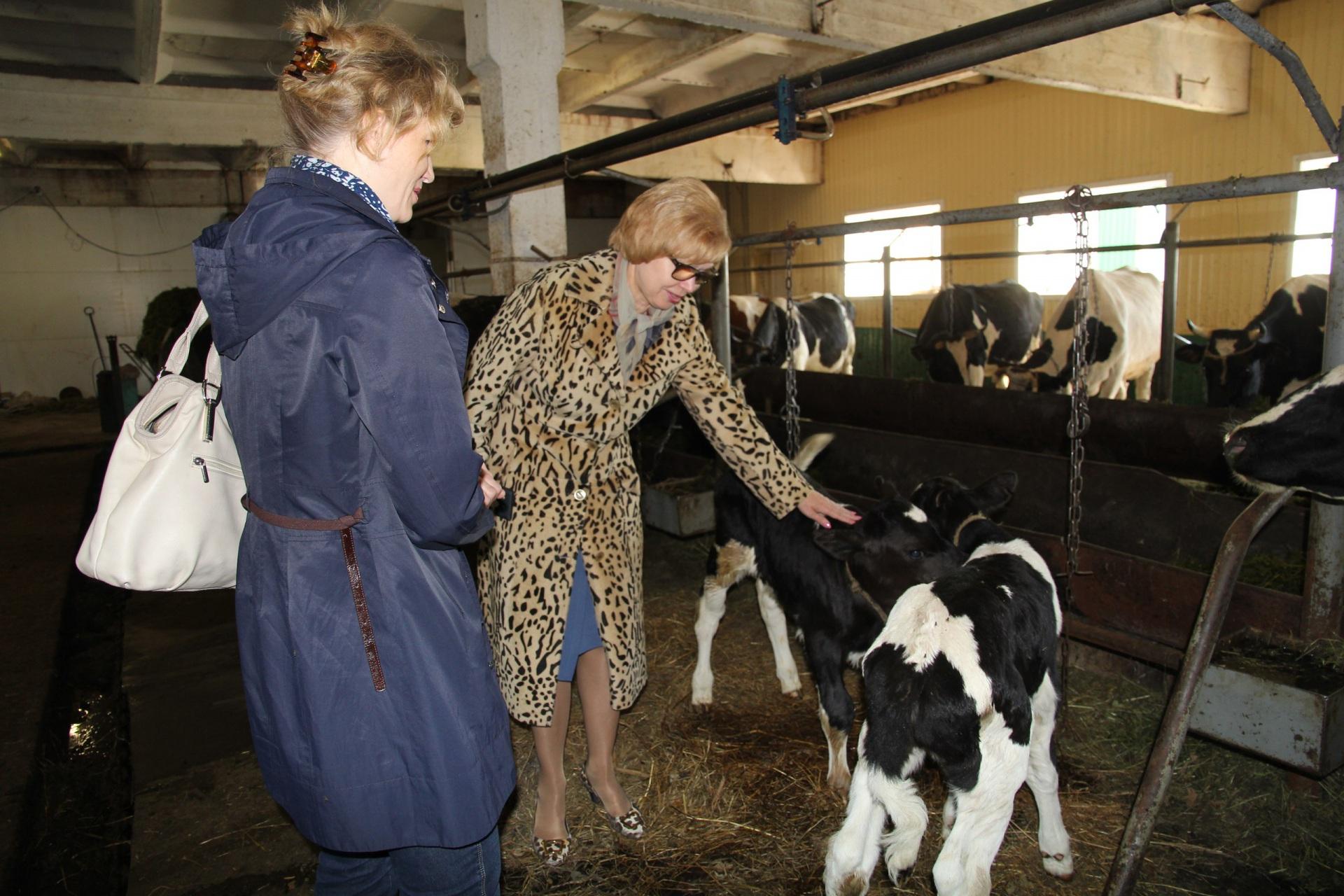 Интинские коровы встретят зиму в комфортабельных условиях
