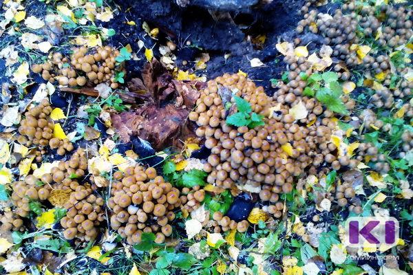 Под Сыктывкаром чуть не погибли двое грибников