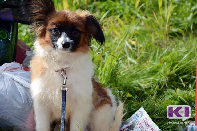 В Госдуму внесен законопроект об ужесточении наказания за жестокое обращение с животными