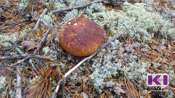 В Коми 13 грибников потерялись в лесу за выходные