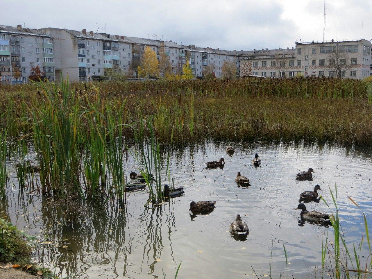 Жители Троицко-Печорска готовят жалобу в прокуратуру на бездействие местных властей