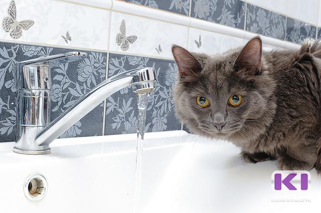 Часть Сыктывкара останется без холодной воды