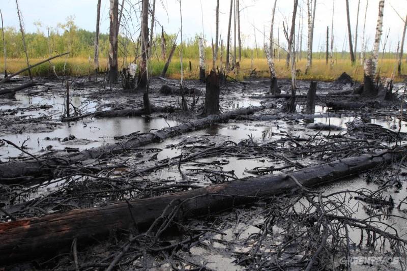 Переработка отходов, снижение выбросов и чистые водоемы - россиянам рассказали о планах в Год экологии