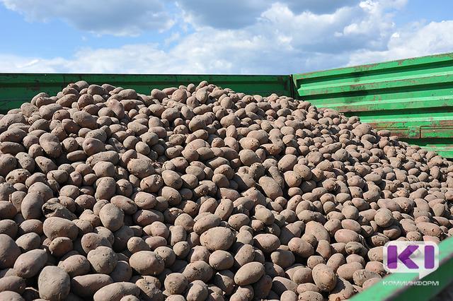 Минсельхоз Коми рекомендует ижемцам сотрудничать по избыткам картофеля с региональной сетью