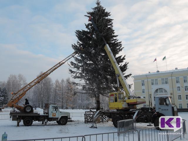 На Стефановскую площадь привезли новогоднюю ель