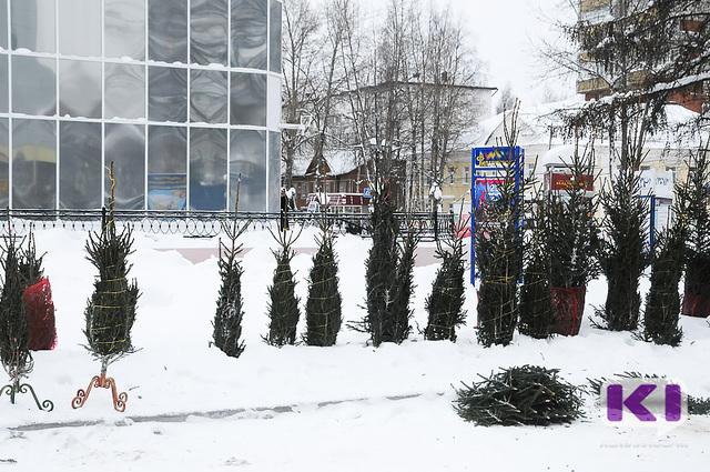 На улицах Сыктывкара можно купить елку стоимостью до 1,5 тыс. рублей