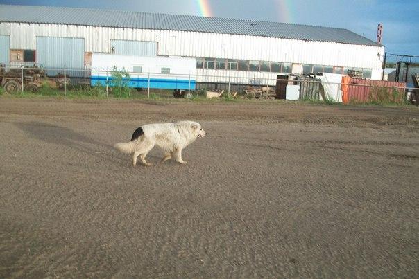 В Усинске возбудили уголовное дело по факту убийства собаки