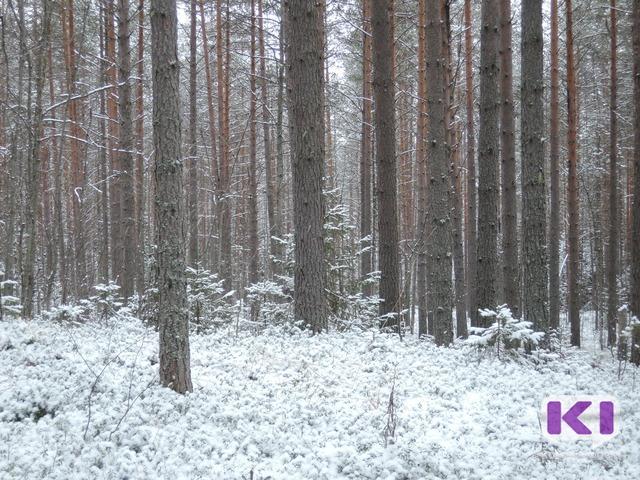 """В """"зеленых поясах"""" России разрешат вырубку деревьев"""