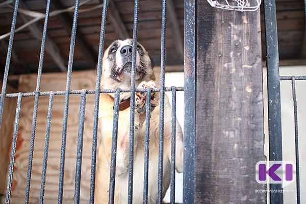 Стерилизацией бродячих собак на Удоре займется новое муниципальное казенное предприятие
