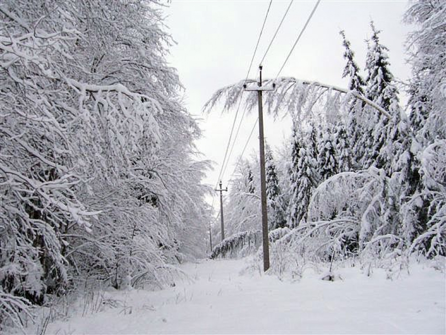 """Участок линии электропередачи """"Кослан-Чернутьево"""" на Удоре выведут из лесного массива"""