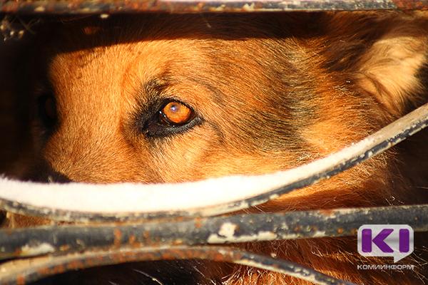Устьцилемам напомнили о запрете свободного выгула собак