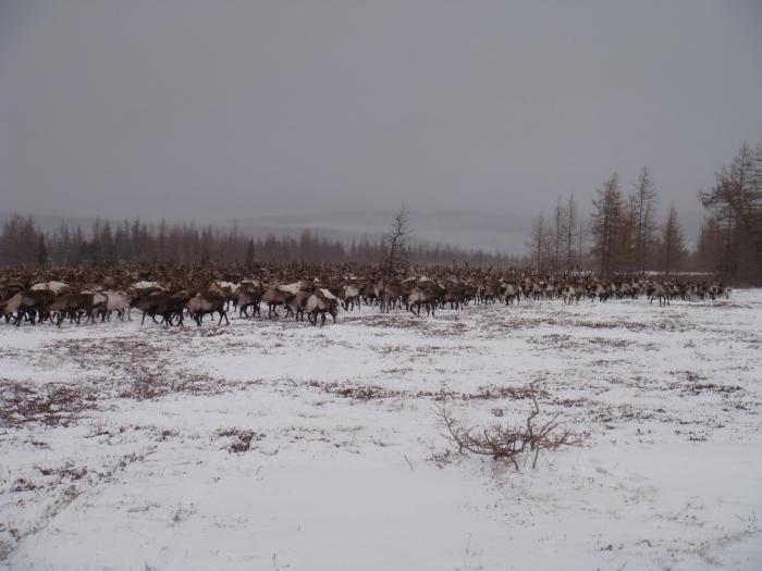 """В агрокомплексе """"Инта Приполярная"""" – новый генеральный директор"""