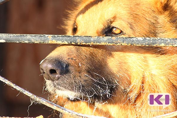 Мэрия Инты потратит миллион рублей на отлов бродячих собак