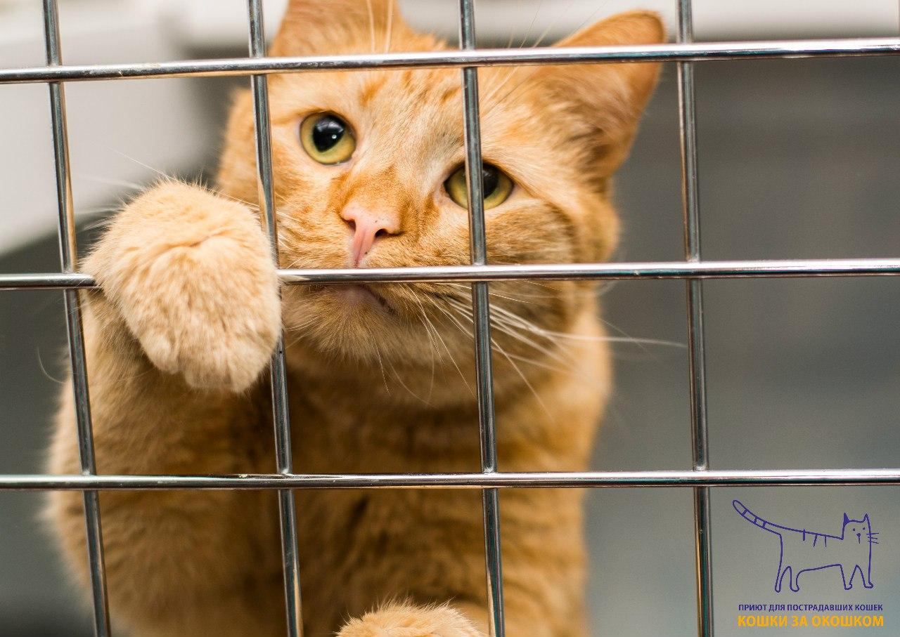 """Сыктывкарский приют """"Кошки за окошком"""" нуждается в помощи волонтеров"""