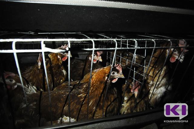 В Коми предприняты меры по недопущению на территорию региона вируса гриппа птиц