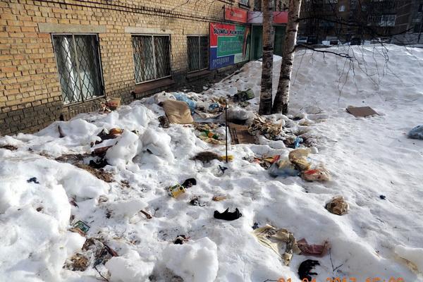 Ухтинские зоозащитники нашли выброшенных с четвертого этажа щенков