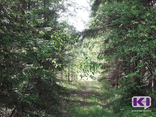 В Сосногорске черный лесоруб попал под амнистию
